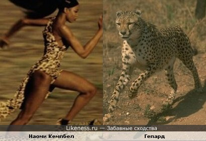 Наоми Кемпбел и гепард.