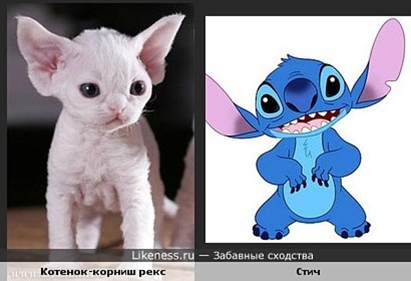 Стич и котенок - забавное сходство!