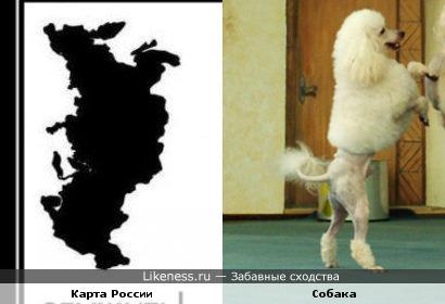 Всегда когда смотрю на карту вижу собаку или лошадь