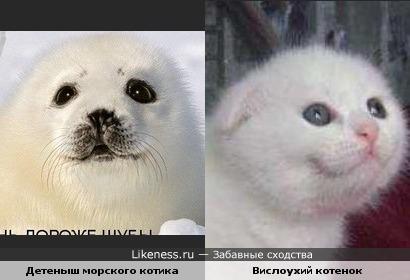 Котик похож на котенка.