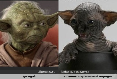 http://img.likeness.ru/uploads/users/649/1258757174.jpg