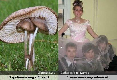 И в продолжении темы о грибах !