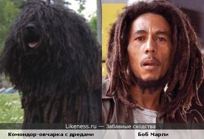 Боб Марли похож на венгерскую овчарку.
