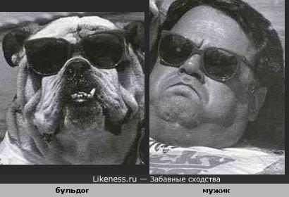Как собаки бывают похожи на хозяев.