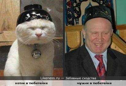 Кот и мужик немного похожи!