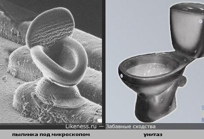 Пылинка под микроскопом похожа на унитаз