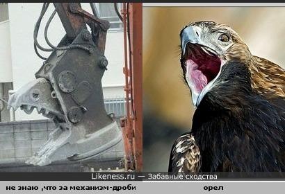Орел и камнедробилка показались похожими.
