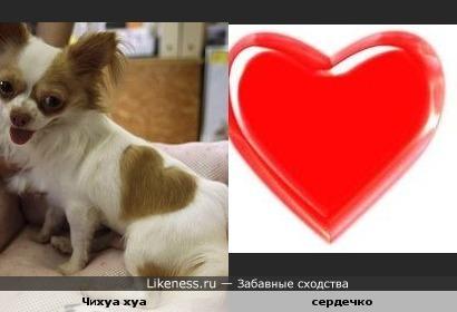Пятно у собаки похоже на сердце.