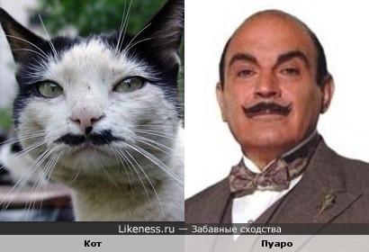 Кот похож на Пуаро