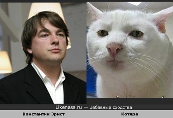 Кот похож на Эрнста