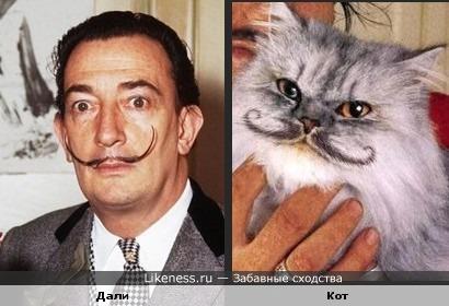 Сальвадор Дали и кот похожи