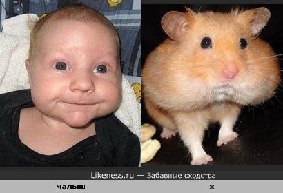 Щеки малыша и хомячка похожи.