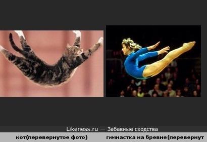 Кот в полете похож на гимнастку
