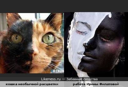 Расцветка кошки похожа на девушку с работы Филатовой Ирины