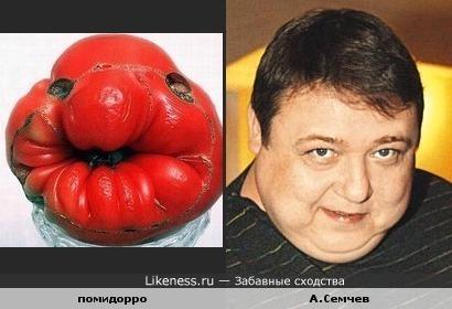 Помидорка похожа на Александра Семчева