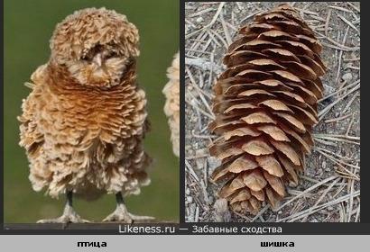 Птичка похожа на еловую шишку