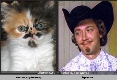 Кот похож на Арамиса