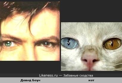 У Девида Боуи и кота одинаковые глаза