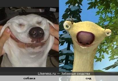 Собака стала похожа на Сида