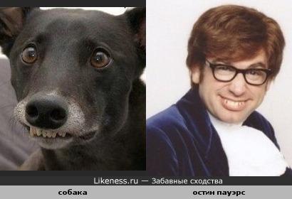 Собака выражение похожа на Остина Пауэрса
