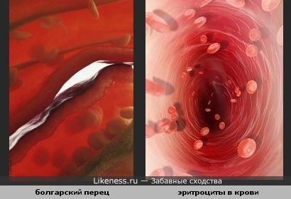 Разрезаный перец похож на сосуды с эритроцитами