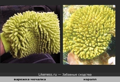 Мочалка похожа на коралл
