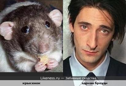 Эдриан Броуди и Этот испуганый крысенок похожи
