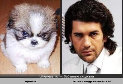 Этот серьезный щенок похож на Александра Ломинского