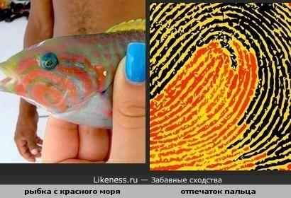 Чудесная морская рыбка с узором похожим на отпечаток пальца