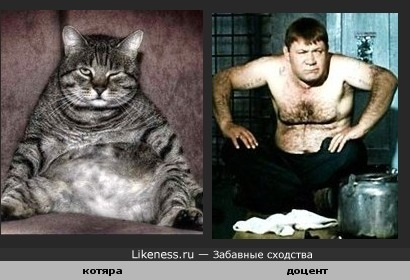 Наглый кот похож на Доцента