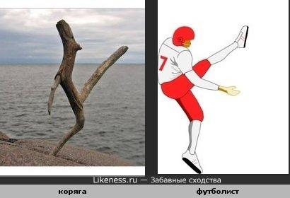 Коряга похожа на футболиста