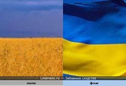 Пшеничное поле похоже на флаг Украины