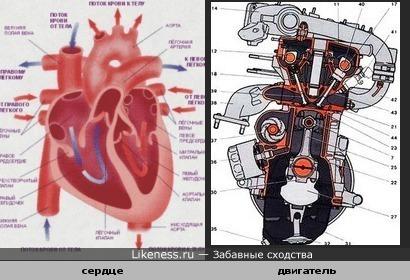 Сердце похоже на двигатель
