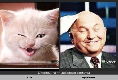 Этот хитрый котик на Лужкова похож