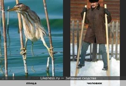 Птичка похожа на человека на ходулях