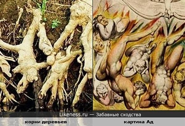 Корни деревьев похожи на картину Ад
