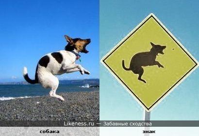 Прыгающая собака похожа на собачку на знаке