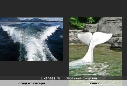 След на воде похож на хвост кита