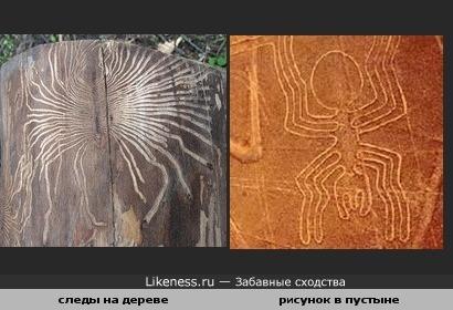 Следы жука короеда на дереве похожи на рисунки в пустыне Наска
