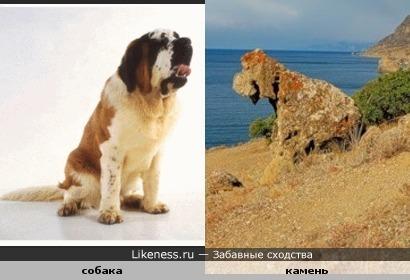 Камень у реки похож на собаку