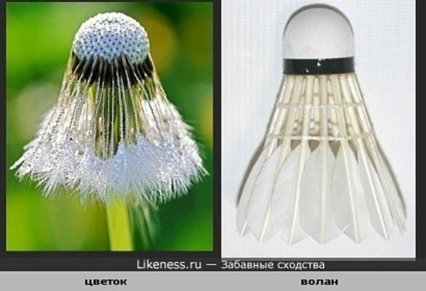 Замерзший цветок похож на волан