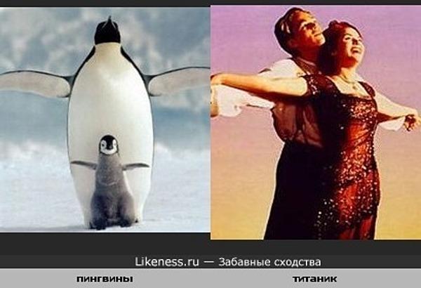Как увидела этих пингвинчиков,сразу вспомнила этот эпизод.