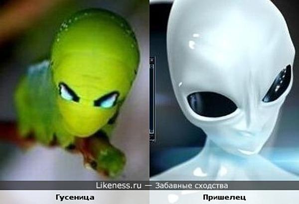 Гусеница похожа на пришельца