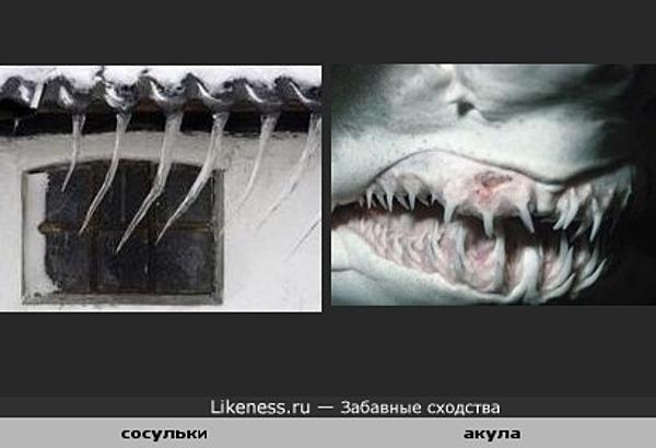 Сосульки похожи на зубы акулы