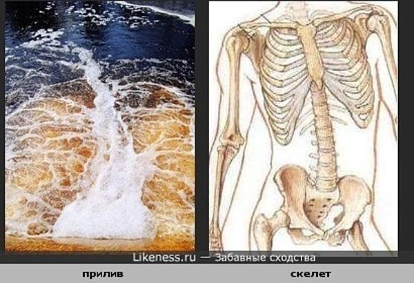Морской прилив похож на грудную клетку