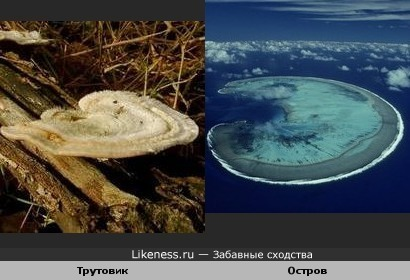 Гриб трутовик похож на остров