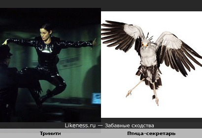 Тринити похожа на птицу-секретаря