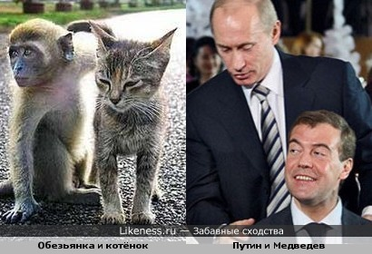 Обезьянка и котёнок - Путин и Медведев