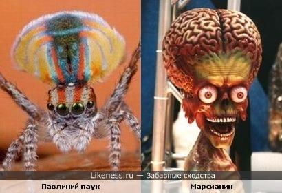 "Павлиний паук и марсианин (""Марс атакует"")"