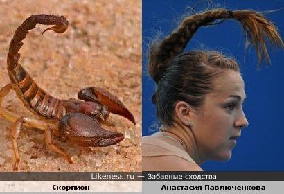 Скорпион и Анастасия Павлюченкова не сдаются